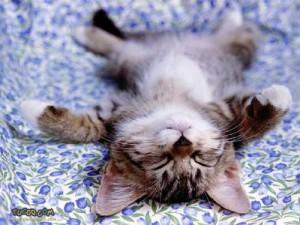 relaxed_kitten-300x225